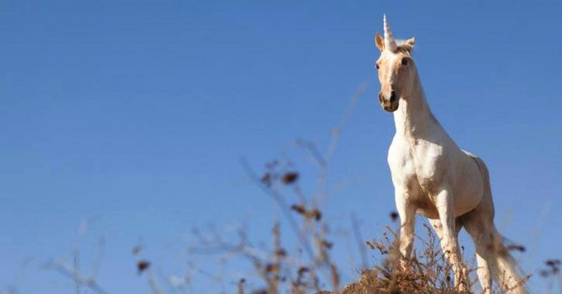 Unicorn Report at London Technology Week